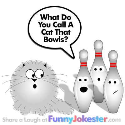 Funny Cat Riddle Joke