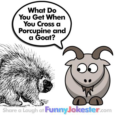 Porcupine Joke