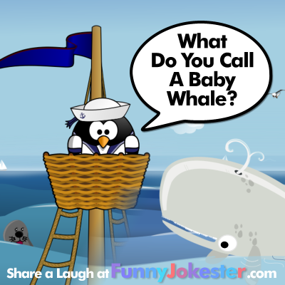 baby whale joke funny jokes